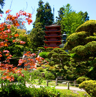 The Pagoda from the Japanese Tea garden